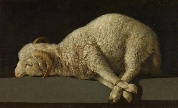 Golgotha Painting - The Lamb Of God, Agnus Dei by Francisco de Zurbaran