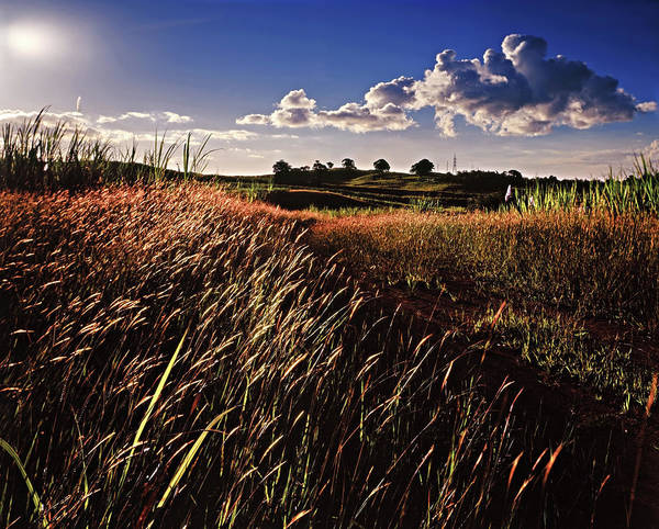 Photograph - The Last Grassy Field, Trinidad by Trinidad Dreamscape