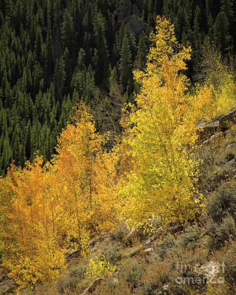 Photograph - The Last Warm Autumn Day by Jon Burch Photography