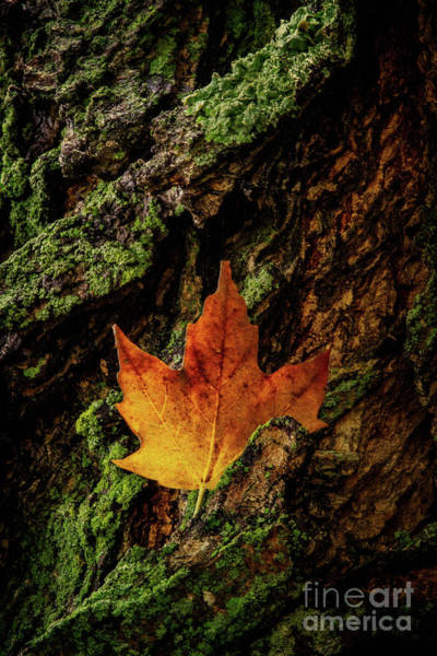 Wall Art - Photograph - The Leaves Are Falling by Todd Bielby