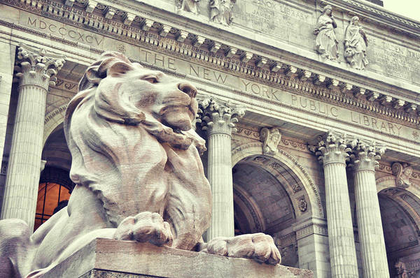 Photograph - The Library Lions by JAMART Photography