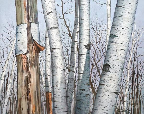 Painting - The Life Of The Wild Birch Trees In Oil Painting by Christopher Shellhammer