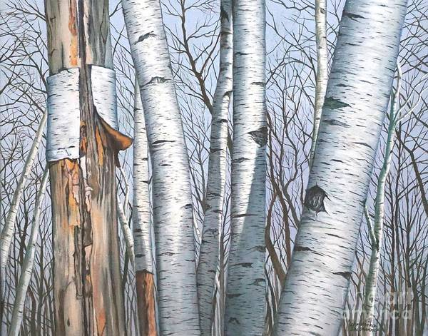 Painting - The Life Of The Wild Birch Trees In Painting by Christopher Shellhammer