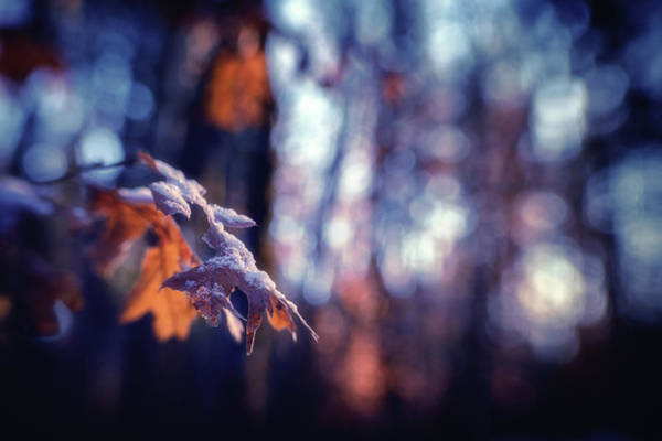 Wall Art - Photograph - The Light In The Woods by Marnie Patchett