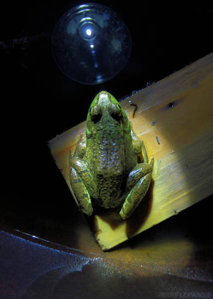 Frog Photograph - The Light by Jerry LoFaro