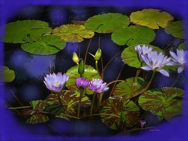 Photograph - The Lily Pond by Angela Davies