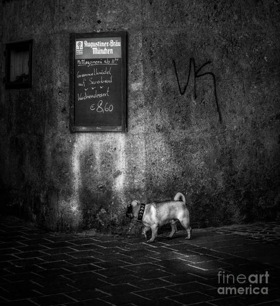 Wall Art - Photograph - The Little Dog  by Flo Photography