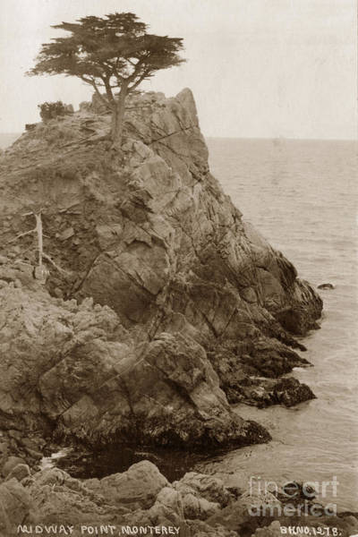 Photograph - The Lone Cypress Tree On Midway Point Circa 1920 by California Views Archives Mr Pat Hathaway Archives