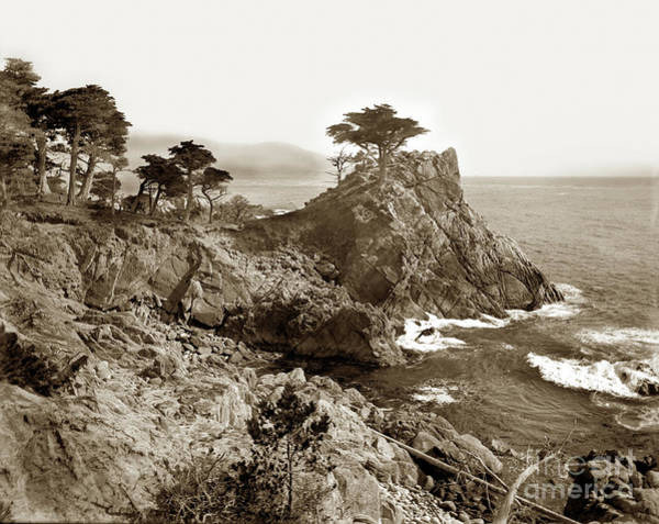 Photograph - The Lone Cypress Tree On Midway Point On The 17 Mile Drive, Pebb by California Views Archives Mr Pat Hathaway Archives