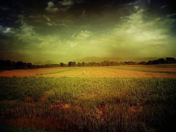 Friuli Photograph - The Lonely Stork by Dima Lauzzana