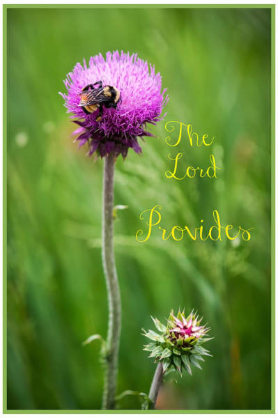 Photograph - The Lord Provides  by Harriet Feagin