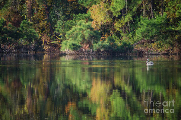 Photograph - The Lure Of The Lake by Dale Powell