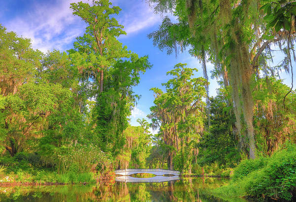 Photograph - The Magnolia Plantation by Dan Sproul