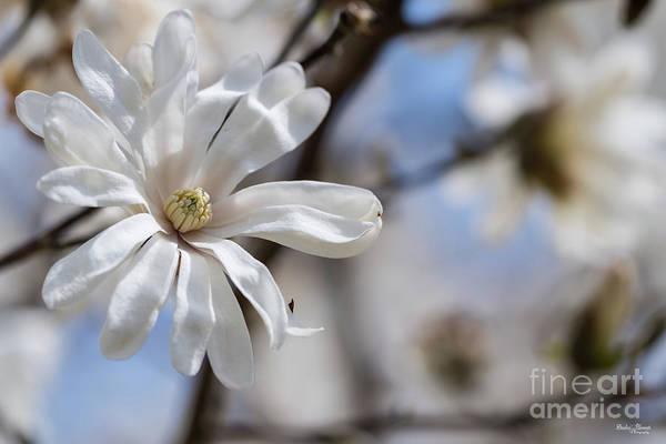 Wall Art - Photograph - The Magnolia Star by Jennifer White