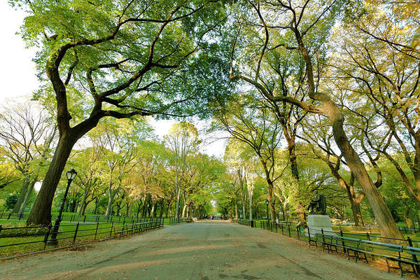 Mall Photograph - The Mall Alley In Central Park by Pawel.gaul