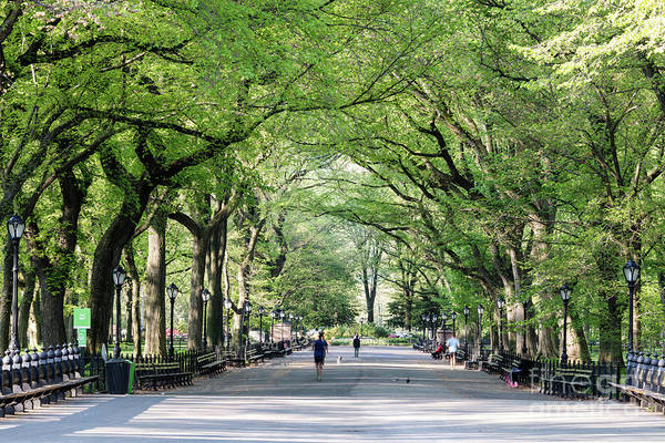 Wall Art - Photograph - The Mall In Spring, Central Park, New York, Usa by Matteo Colombo