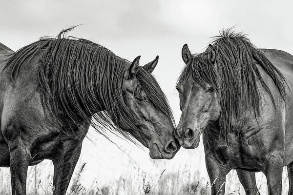 Wall Art - Photograph - The Mane Attraction by Dawn Key