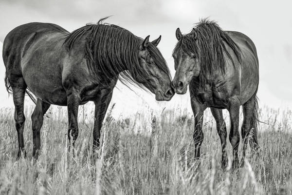 Wall Art - Photograph - The Mane Attraction II by Dawn Key