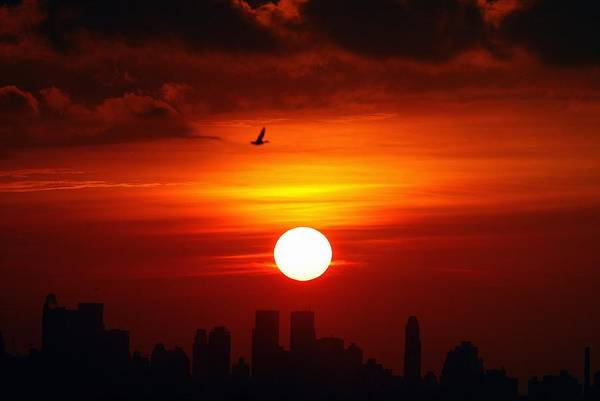 Queen Photograph - The Manhattan Skyline And A Lone Bird by New York Daily News Archive