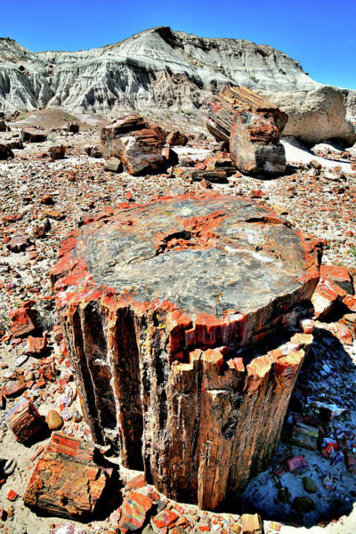 Photograph - The Many Colors Of Jasper Forest Petrified Wood by Ray Mathis