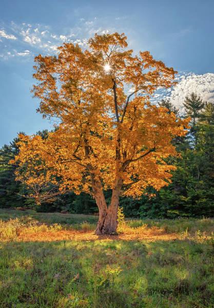 Photograph - The Maple Tree by Kristen Wilkinson