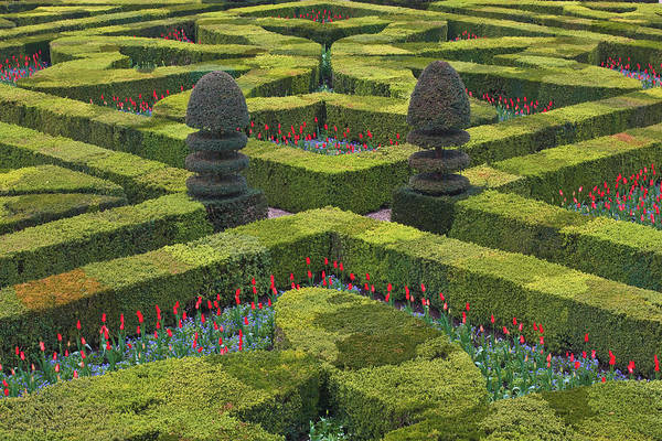 Villandry Photograph - The Maze Like Hedges At The Chateau Of by Julian Elliott Photography