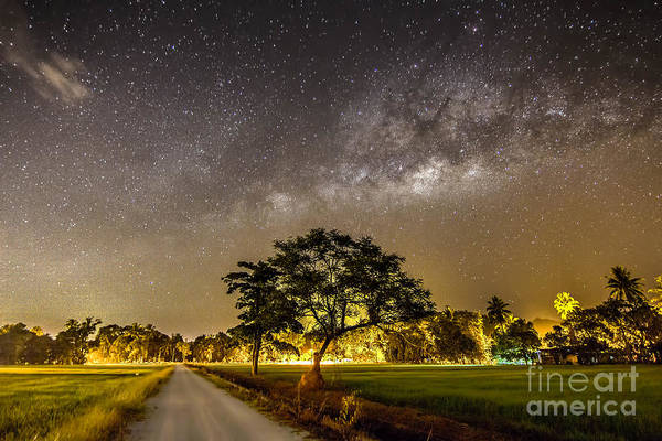 Dark Nebula Wall Art - Photograph - The Milky Way And The Tree Stand Alone by A.aizat