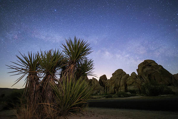Wall Art - Photograph - The Milky Way Rises Above Desert Plants by Jeff Dai