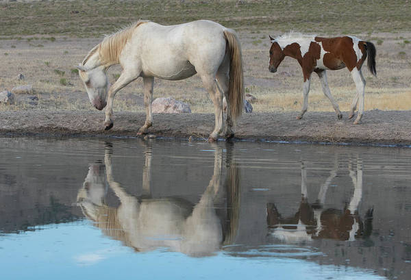 Photograph - The Mirror by Kent Keller
