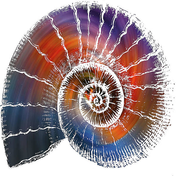 Digital Art - The Nautilus Shell Transparent 2 by OLena Art - Lena Owens