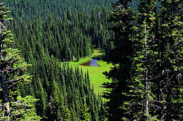 Photograph - The Northwest Forest by Tikvah's Hope