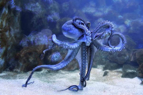 Wall Art - Photograph - The Octopus by Joachim G Pinkawa