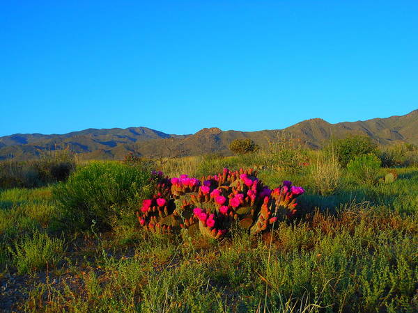 Wall Art - Photograph - Color Of The Desert In Spring by James Welch
