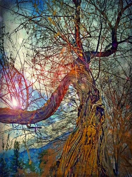 Timeworn Photograph - The Offering by Tara Turner