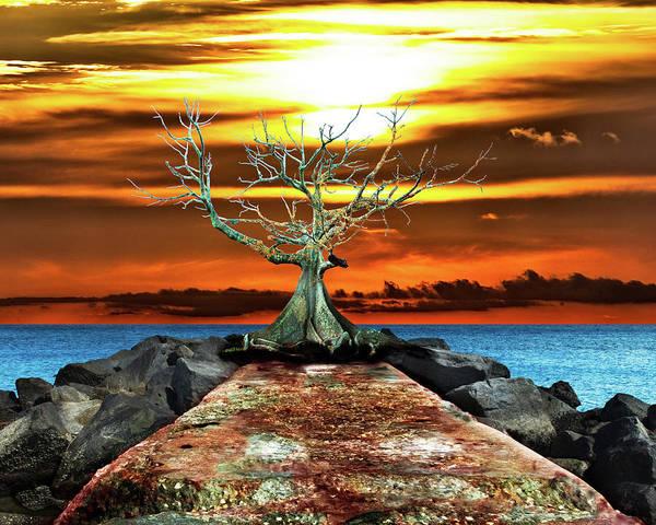 Jetti Wall Art - Photograph - The Old Kapok Tree by Christopher Gatelock