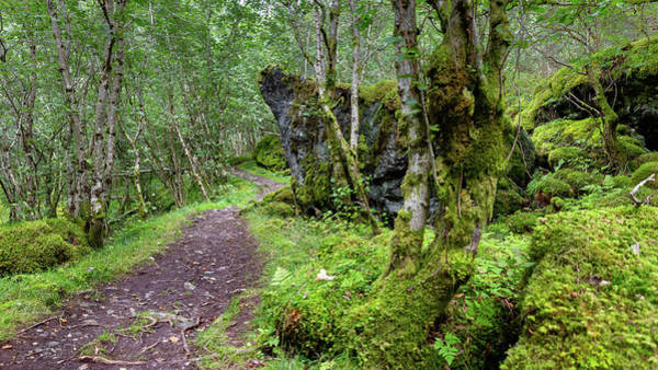Photograph - the old royal postal route in Norway by Andreas Levi
