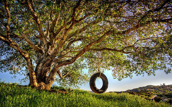 Photograph - The Old Tire Swing by Endre Balogh