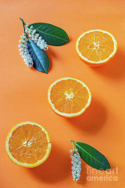 Photograph - The Oranges Halves On Orange Background by Marina Usmanskaya
