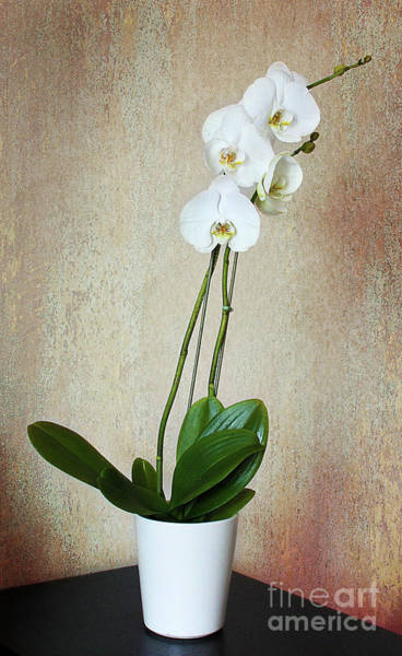Photograph - The Orchid by Milena Ilieva