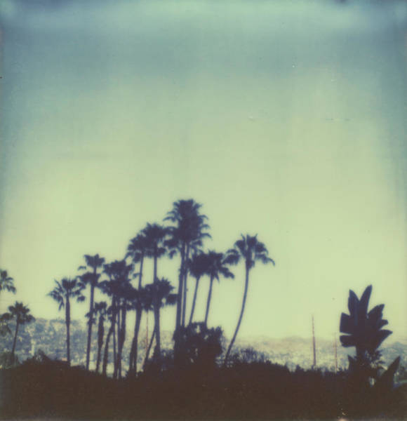 Palm Tree Photograph - The Palms by Kristen Geraci