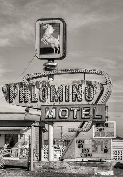Photograph - The Palomino Black And White by JC Findley