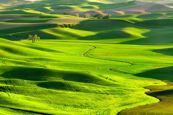 Agriculture Photograph - The Palouse Rolling Hills by Justinreznick