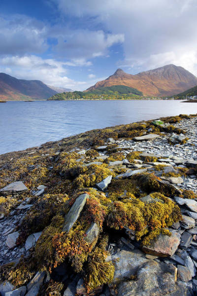 Seaweed Photograph - The Pap Of Glencoe From The Shores Of by Adam Burton / Robertharding