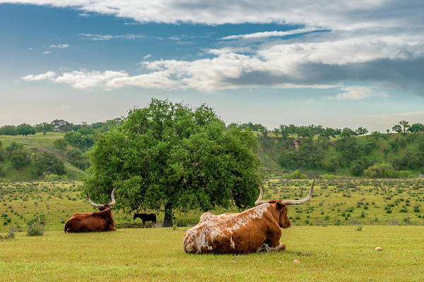 Wall Art - Photograph - The Pastural Life by Joseph Smith