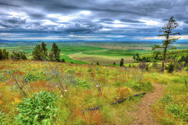 Photograph - The Path Down Kamiak Butte by David Patterson
