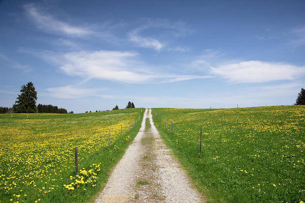 June Photograph - The Path In Meadow, Springtime, Bavaria by Wingmar