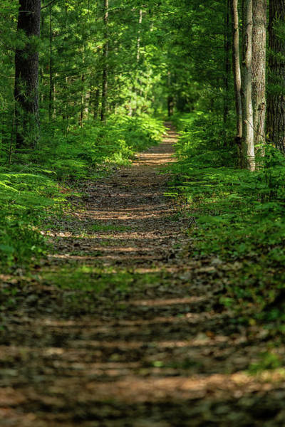 Photograph - The Path Less Traveled by Heather Kenward