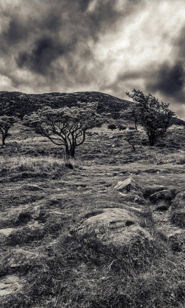 Photograph - The Path Up Slemish by Alan Campbell