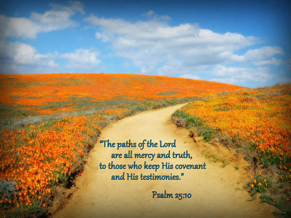 Psalms Photograph - The Paths Of The Lord by Glenn McCarthy Art and Photography