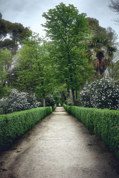 Photograph - The Paths Of The Retiro Park by Fine Art Photography Prints By Eduardo Accorinti
